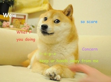 original doge meme - What is Dogecoin (DOGE)? A Beginner's Guide